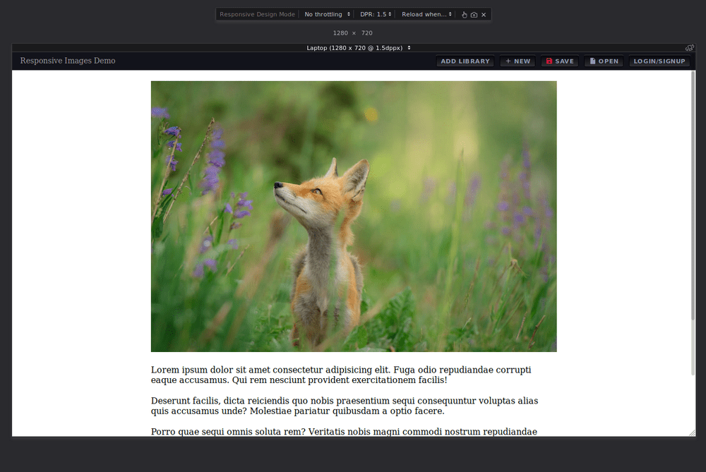 Image of Fox is displayed in landscape mode on a laptop